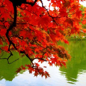 fall-branch-over-water