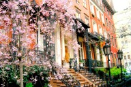 Spring-in-NYC_0001_NEW_converted